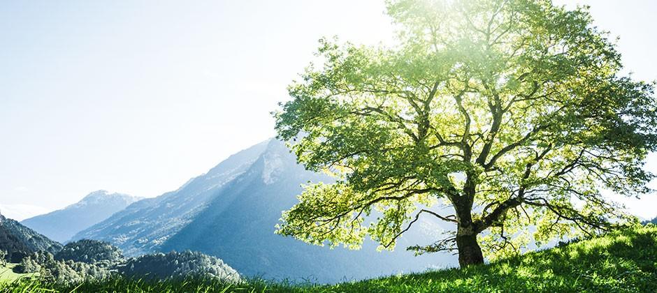 Drucken, Falzen, Klima schützen!